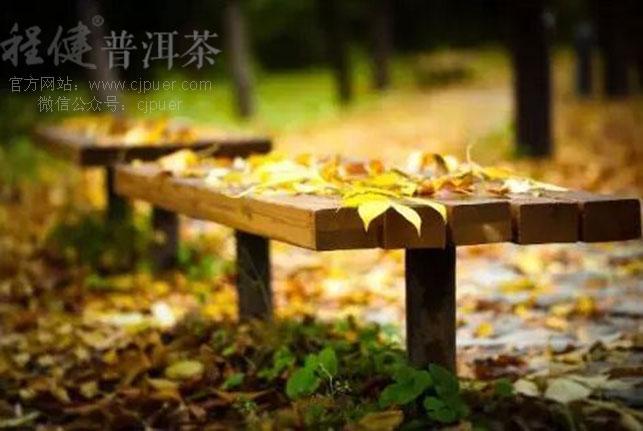 秋分枫叶手绘图